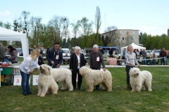komondor kutyakiállításon