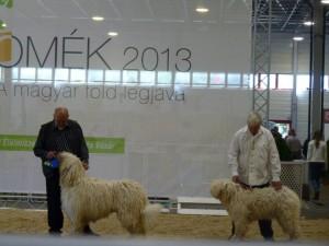 Angyal - Magyar kutyafajta bemutatón, az OMÉK-on