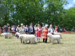 Hevesi Portámkincse Betyár - Bugac, 2014. 06.22. K1., HPJ, Fiatal Klubgyőztes Kan