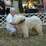 komondor_devecser_cac8