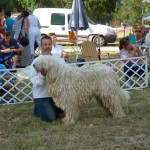 komondor_devecser_cac9