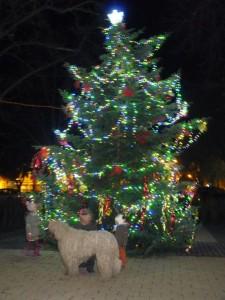 komondor_karácsony1