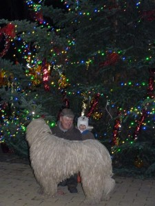 komondor_karácsony3