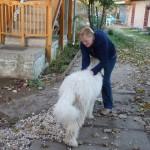 komondor_kisboglya9