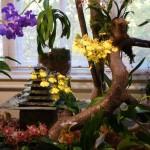 orchidea8
