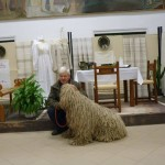 komondor_advent1e