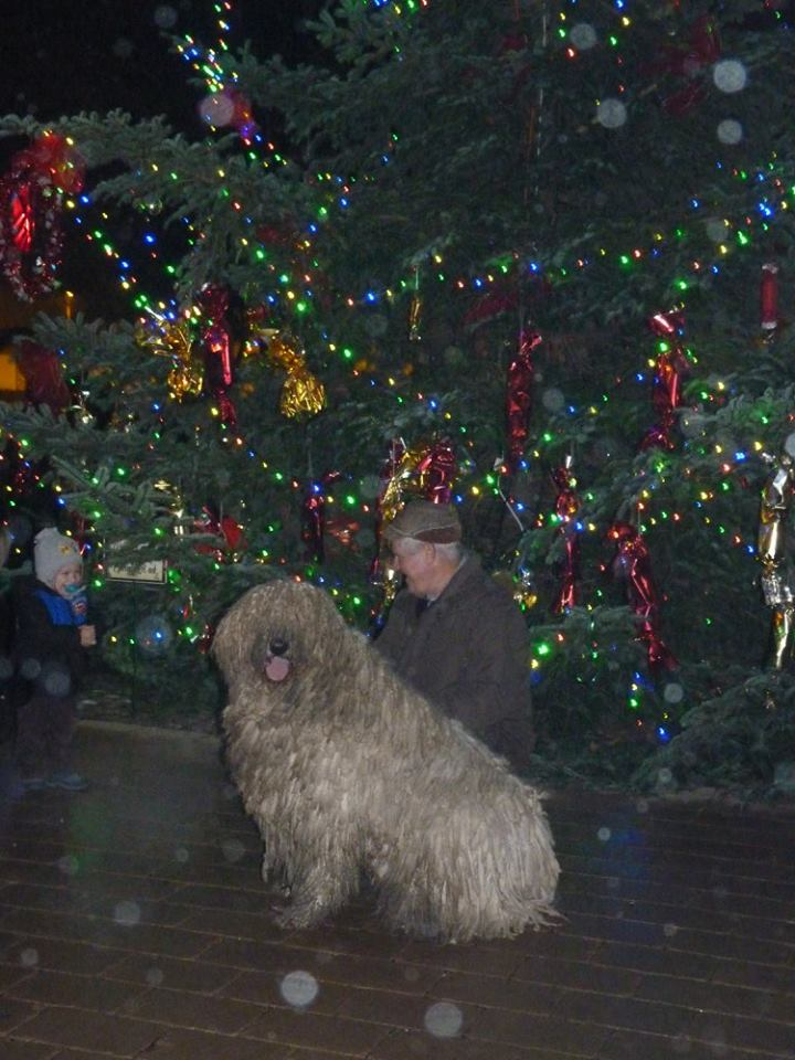 komondor_advent6