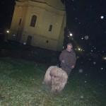 komondor_advent8
