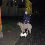 komondor_advent_a4