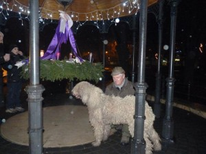 komondor_advent_a8