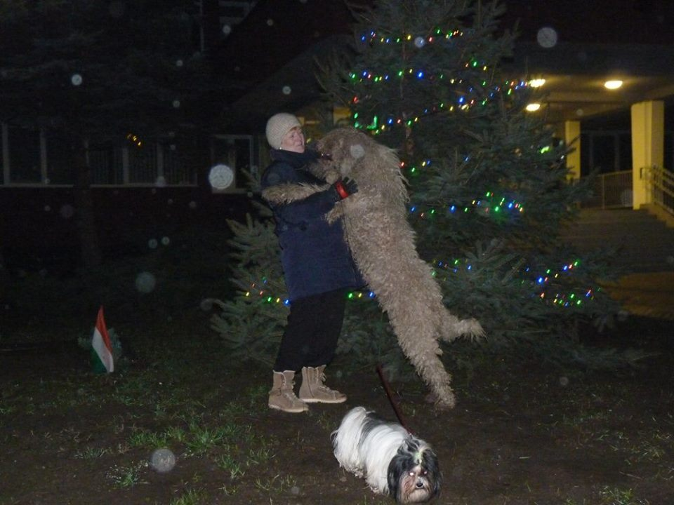 komondor_advent_a9