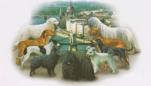 Hungarian_national_breeds