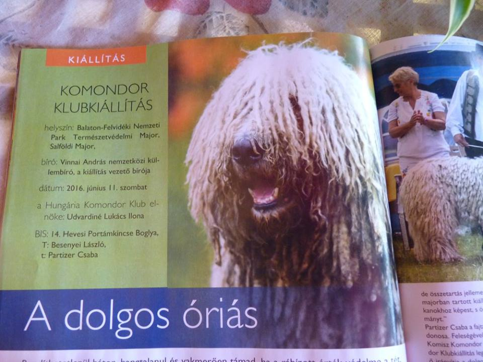 """Breaking news!!! Hevesi Portámkincse Betyár és Hevesi Portámkincse Boglya """"A kutya"""" újság hasábjain!"""