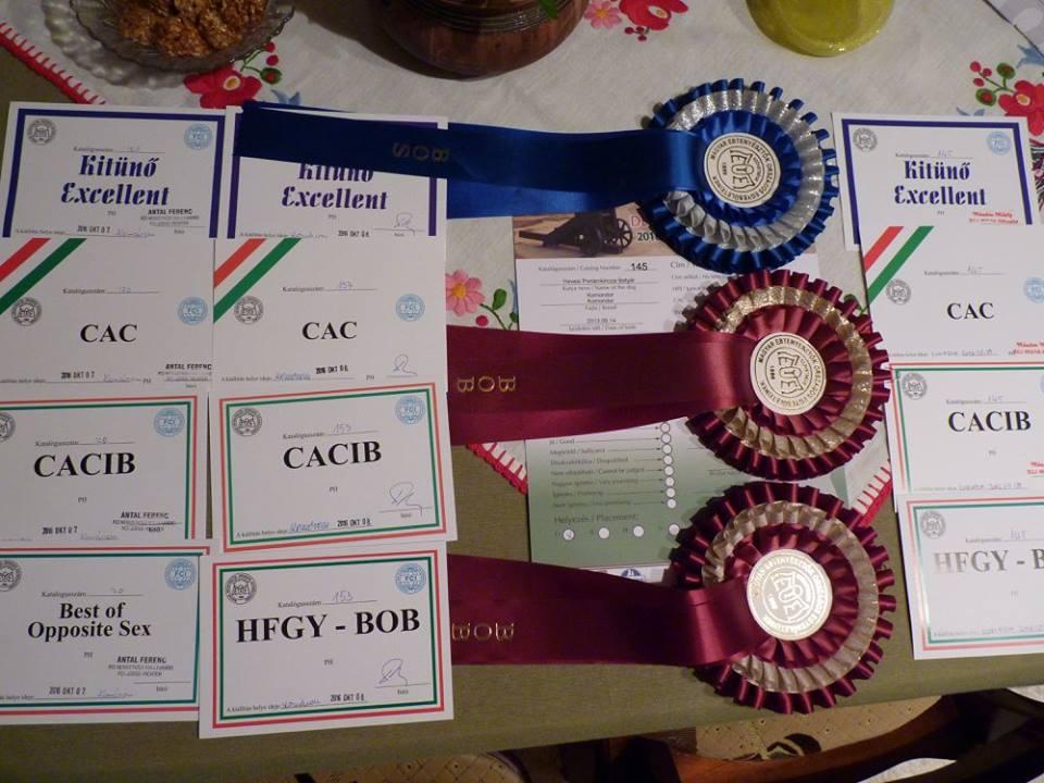 Betyár háromszoros, abszolút nemzetközi győztes lett Komáromban!